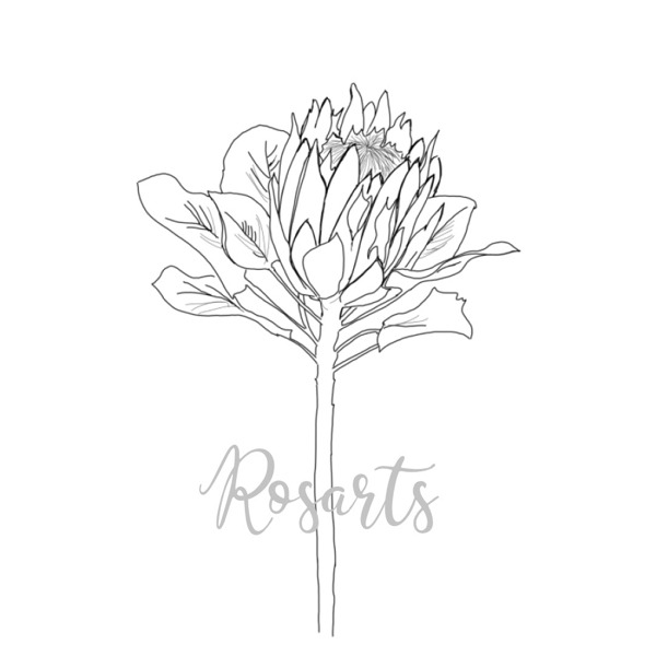 Illustrated Protea Logo